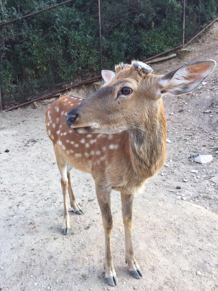 【携程攻略】北京延庆八达岭野生动物园好玩吗