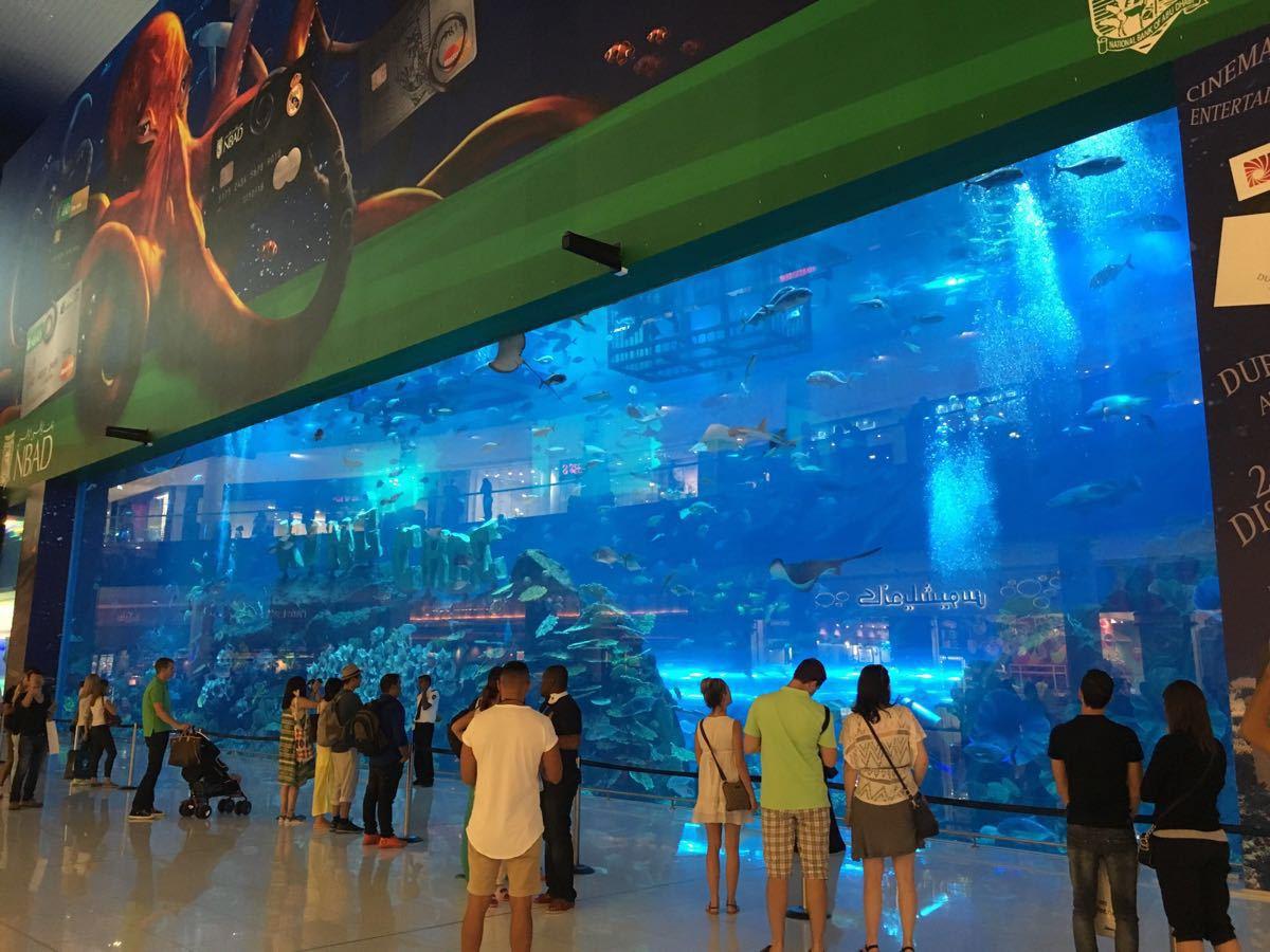 【携程攻略】迪拜迪拜水下动物园景点