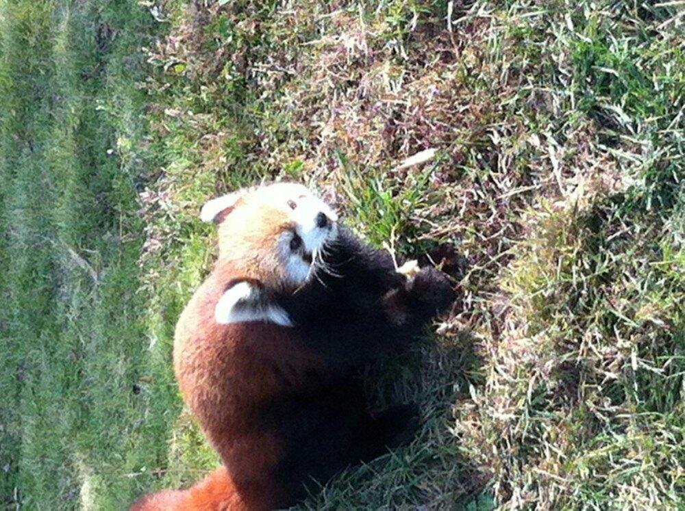 【携程攻略】山东青岛森林野生动物世界好玩吗