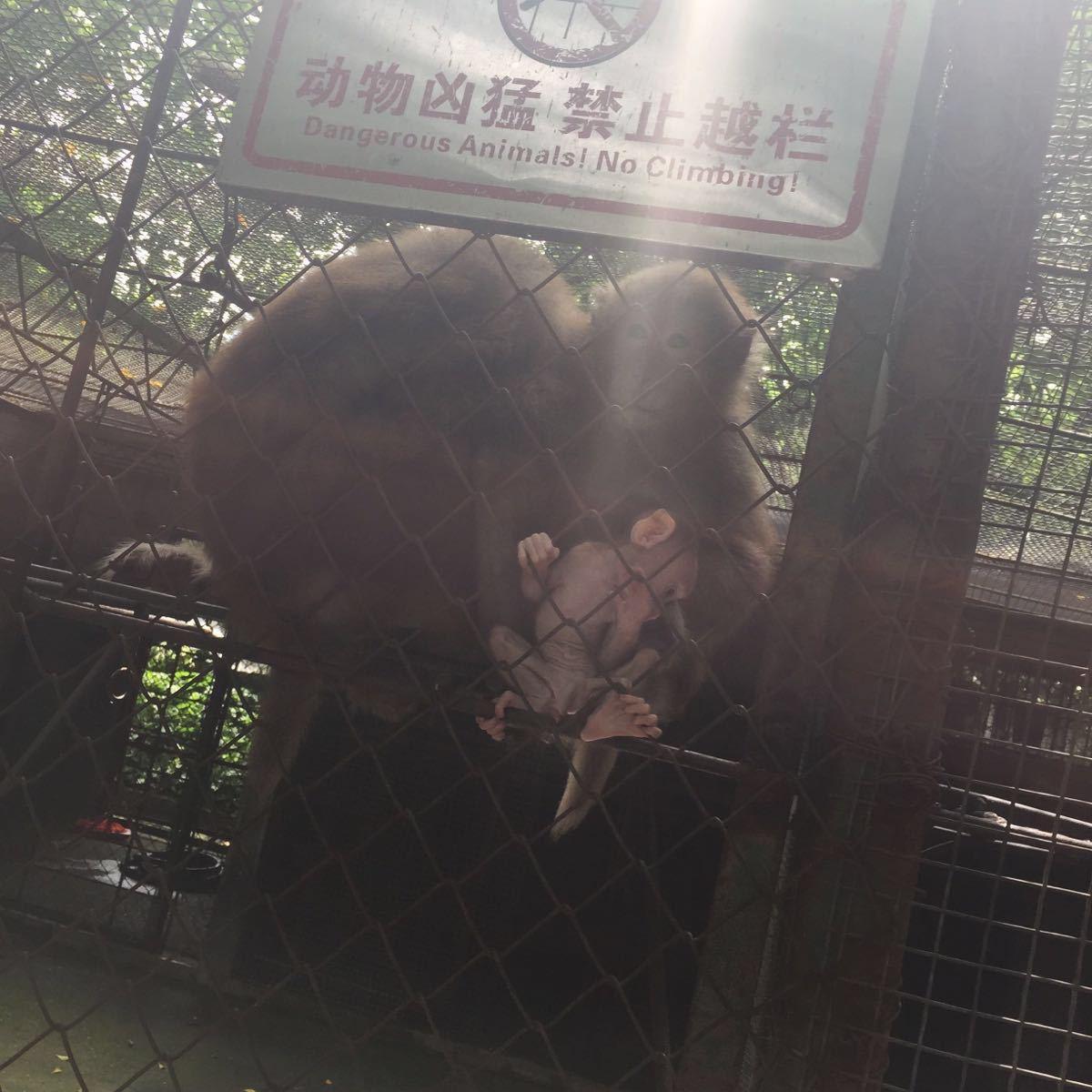 【携程攻略】广西南宁动物园情侣出游点评