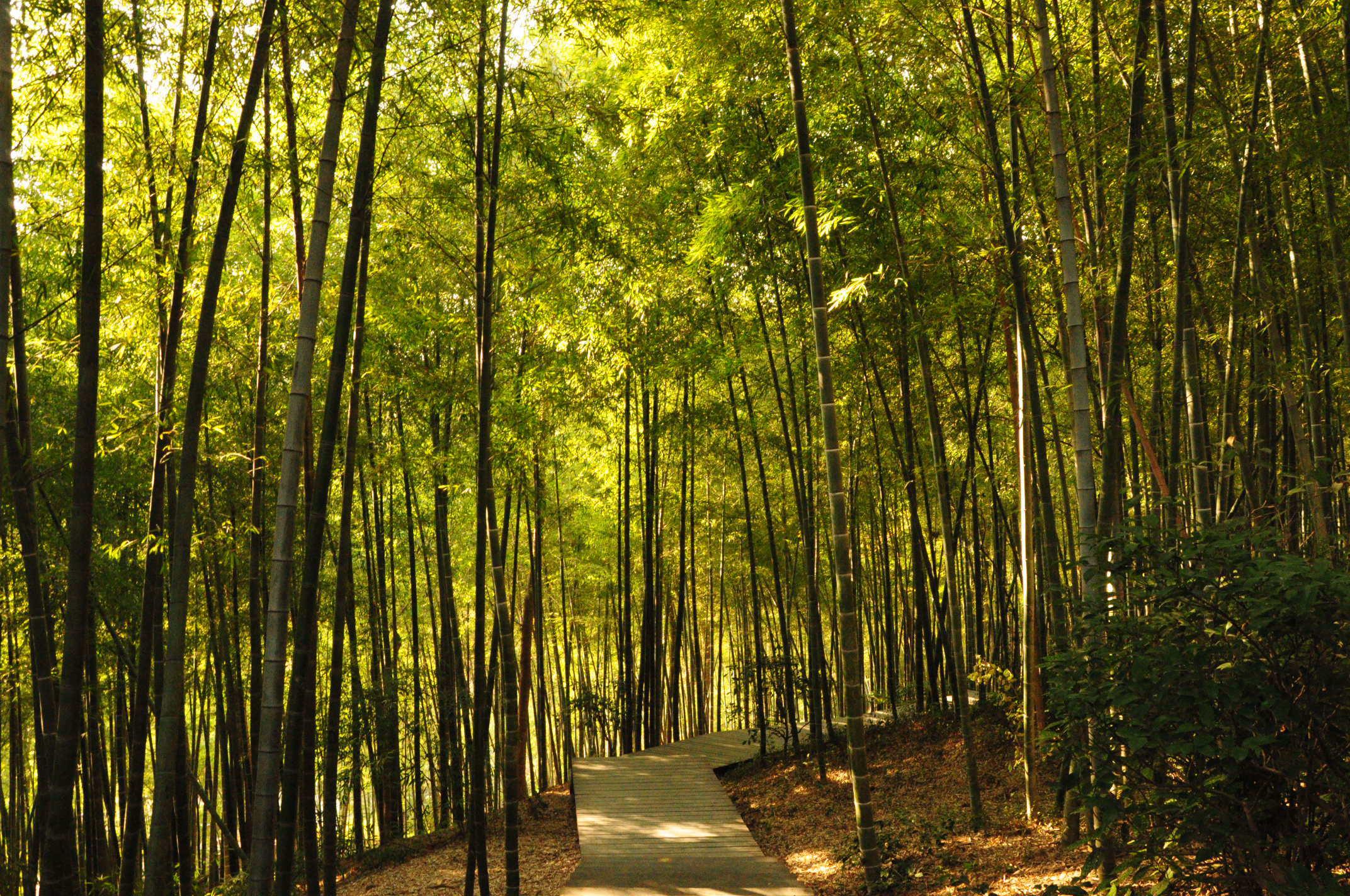 壁紙 風景 森林 植物 桌面