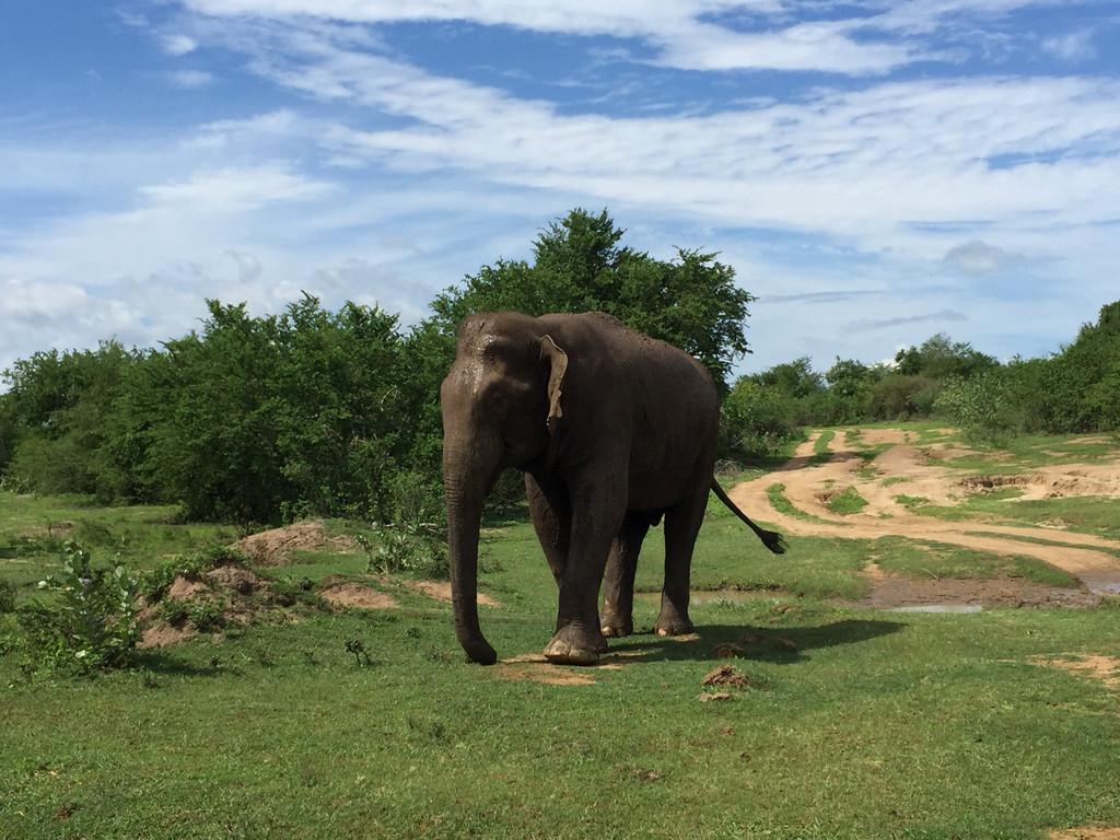 大象在吃草图片