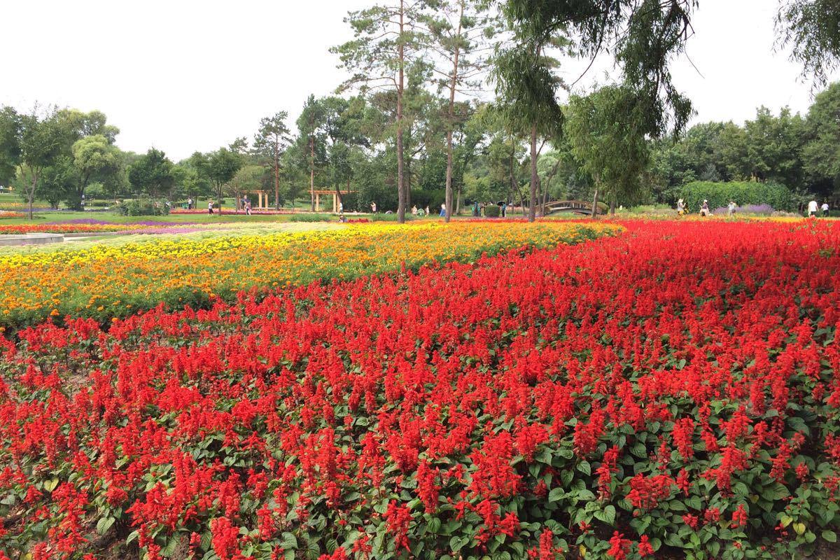 用一天时间,在岛上慢慢行走,呼吸大自然的清新空气,欣赏花园,湿地的