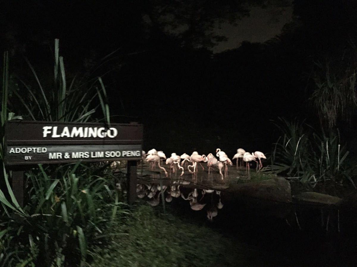 夜间野生动物园怎么样