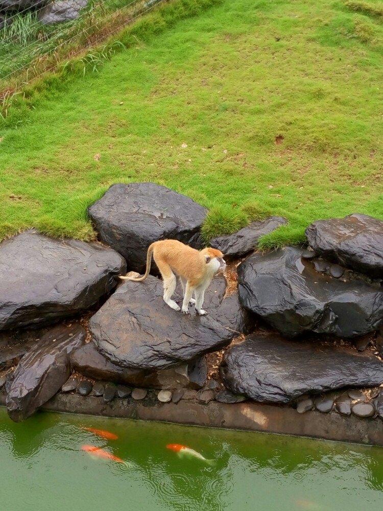 【携程攻略】湖南长沙生态动物园适合情侣出游旅游吗