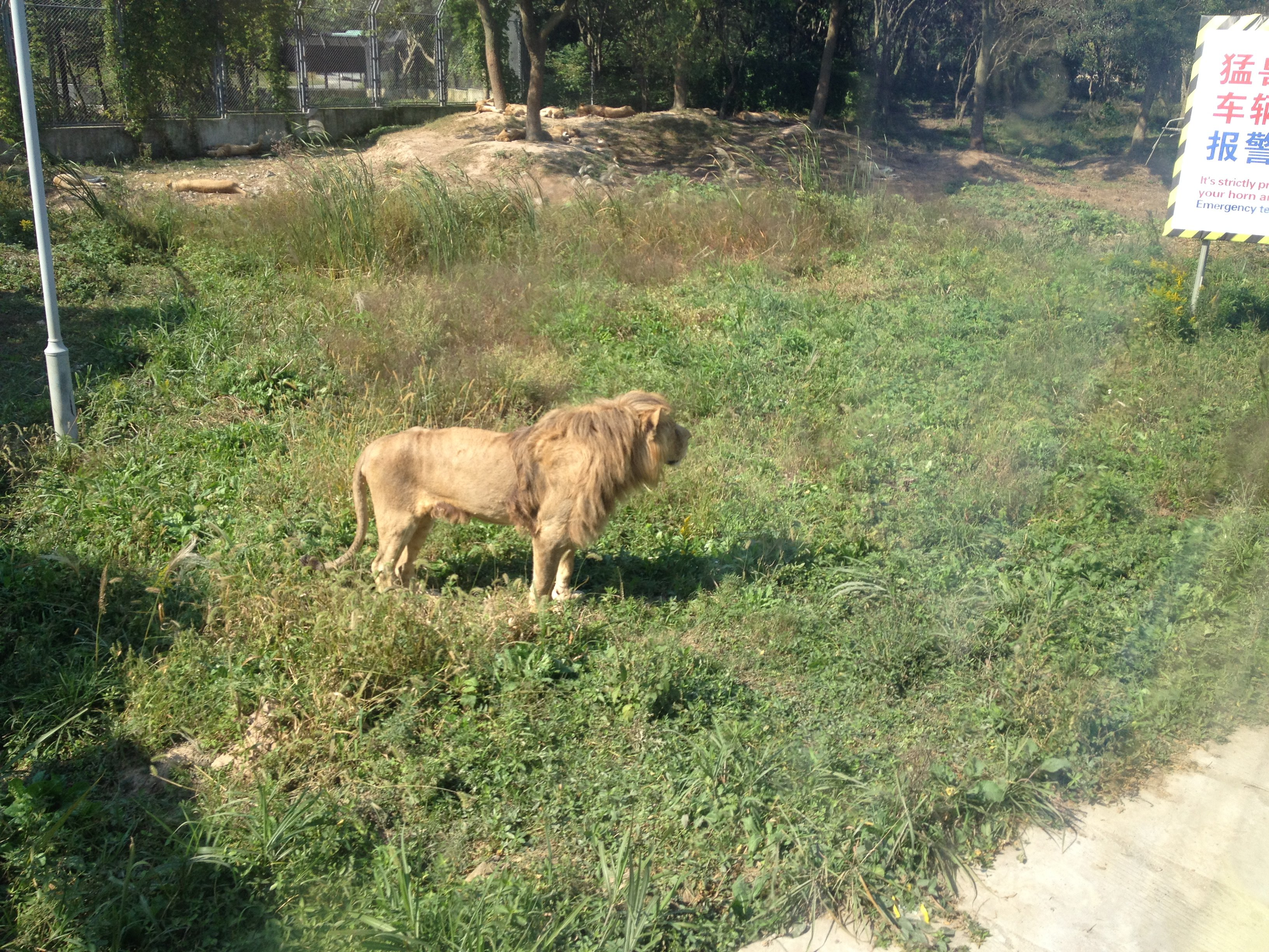 上海野生动物园里的动物种类很多