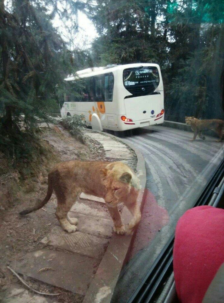 【携程攻略】四川碧峰峡野生动物园适合商务旅行旅游