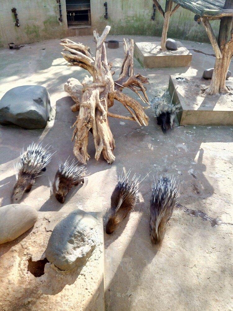 【携程攻略】云南云南野生动物园景点