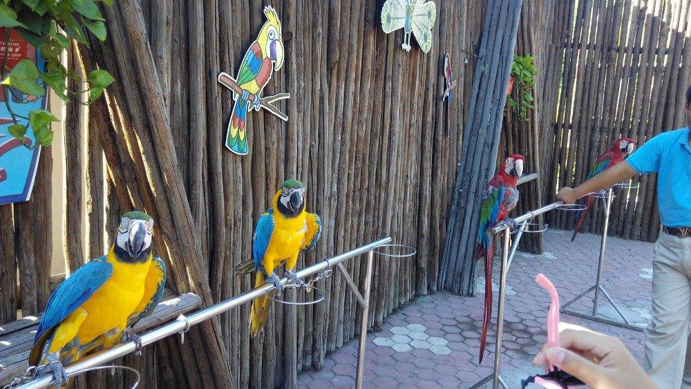 壁纸 动物 鸟 鹦鹉 1000_563