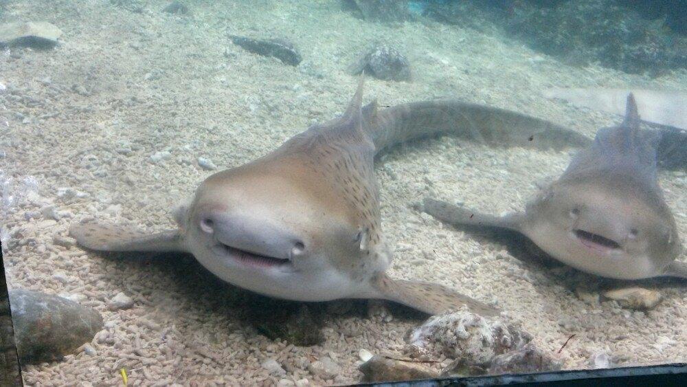 因为行程里有个小孩,所以选择了这个景点。海洋世界并没有电视上看到的那种与海底相连,透过玻璃看到海底世界的景点。里面所有景点都是小型的,模拟海洋里的生态。有几个景点还是值得去看看的,像海底隧道,幻影海底世界馆(名字不确定),鲨鱼馆,水母馆。海洋世界里有很多表演。假日里每天一般会有5轮演出,进景点时可以拿张节目安排单,去看看这里的节目。节目都是很精彩的。像小丑跳水,海豚、海狮、白鲸等动物的表演。景点里还有一些水上娱乐活动,和儿童乐园,小孩都很喜欢。真的建议选择非节假日时去玩,不然真的是看人的因为去的小孩特别多
