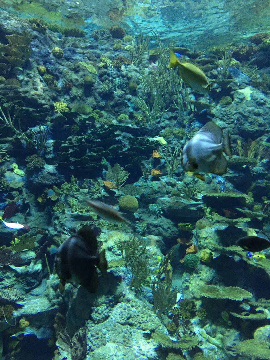 礼物动物海洋水晶罩子
