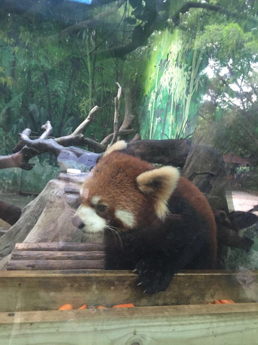 公園以大規模野生動物種群放養和自駕車觀賞為特色,集動、植物的保護、研究、旅游觀賞、科普教育為一體,擁有華南地區亞熱帶雨林大面積原始生態。 考拉、大熊貓、黃猩猩、亞洲象、食蟻獸等世界各國國寶在內的500余種20,000余只珍奇動物,擁有全國首創的自駕車觀賞動物模式。劇場分為方舟劇場、大象劇場、河馬劇場、花果山劇場等四大劇場。每個劇場不同時間都會有表演,大象劇場一定要提前去占位置。如果坐在第一排運氣好的話還可以和大象來個親密接觸哦~ 動物世界分為自駕車游覽區和步行游覽區兩部分。自駕車游