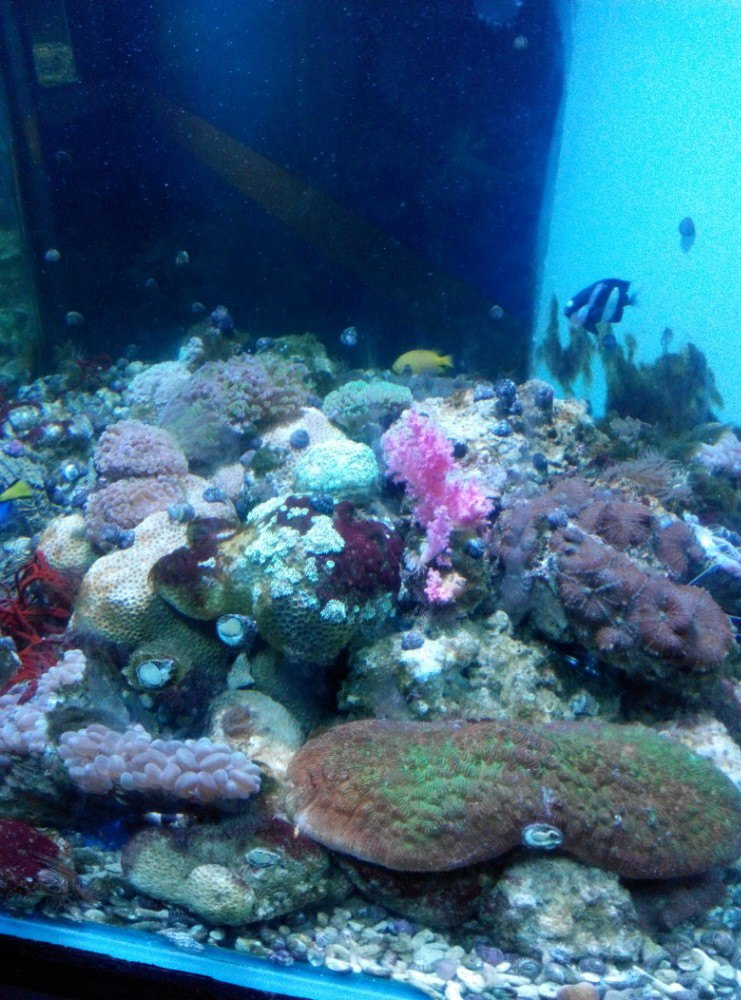 壁纸 海底 海底世界 海洋馆 水族馆 桌面 741_1000 竖版 竖屏 手机