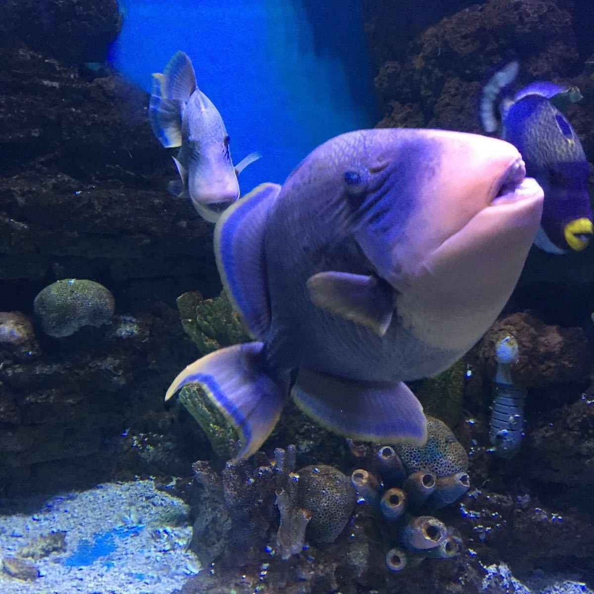 【携程攻略】安徽合肥合肥海洋世界好玩吗
