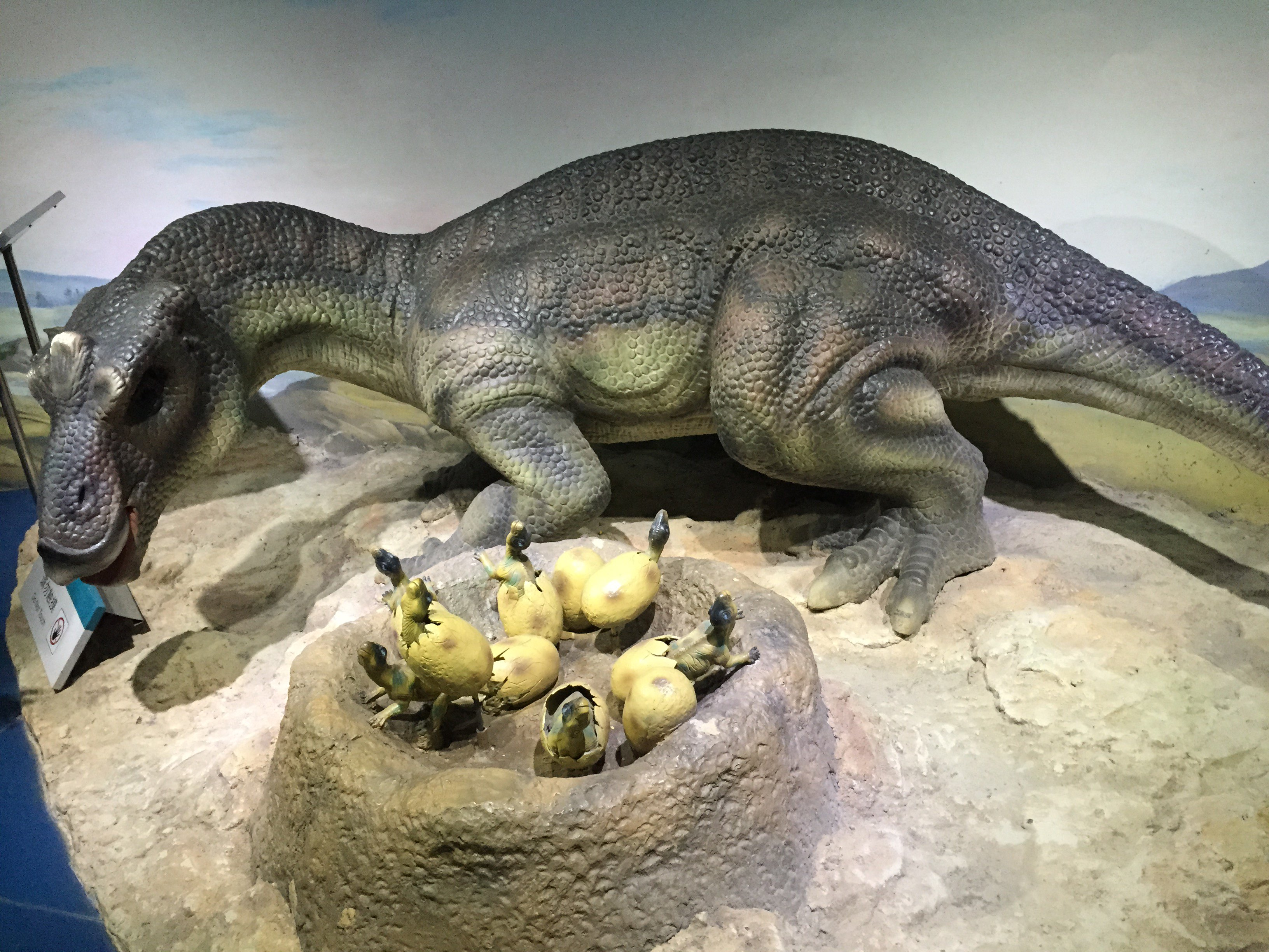 我家小孩非常喜欢自然博物馆,里面有海底世界,恐龙公园,人体馆,昆虫