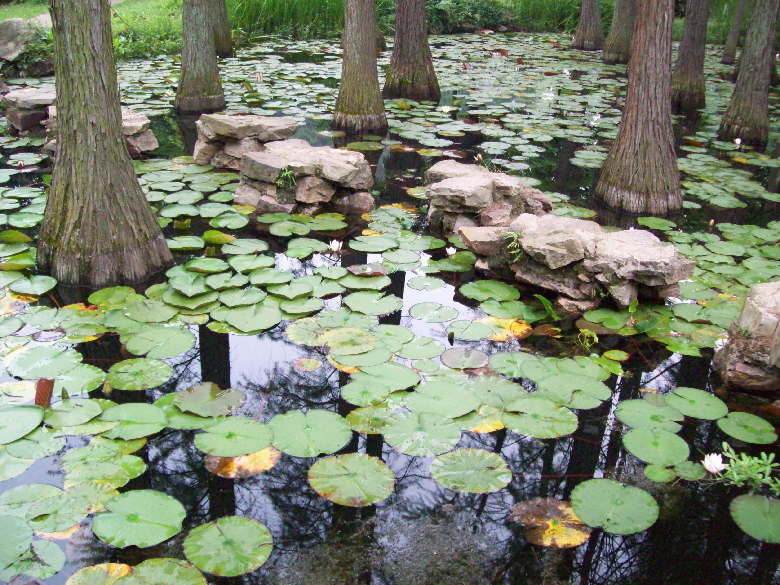 武汉植物园第六章级s暖暖攻略级公主奇迹图片