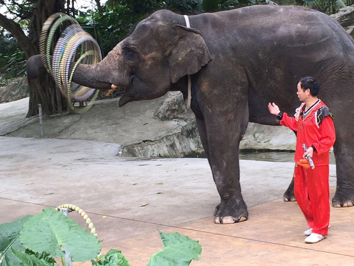 里面的小动物就在你的身边!根本不像有的动物园是的大铁栏圈着,这里动物超级自由,生活无拘无束,放心,游客也是很安全的!里面最最精彩的一幕要数喂老虎了!太酷了!你在铁皮车里,零距离喂它鸡腿吃!好幸福啊!哈哈!里面各种动物都有!相当齐全!还看到有学校带着小学生们来游玩!值得推荐!里面空气也很好!游玩起来也很方便,买一张车票,在里面无限坐,工作人员也十分的热情!很细心的会跟你一一讲解,动物叫什么,习性,等等等等,堪比赵忠祥讲的动物世界!里面有一只红毛猩猩是我的最爱!她太懂人性了!相当聪明可爱啊!他会跟你隔着玻璃击