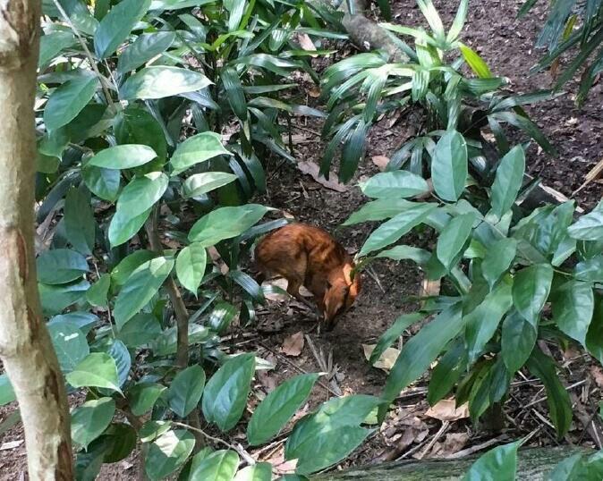 新加坡动物园看到了白虎,犀牛,袋鼠