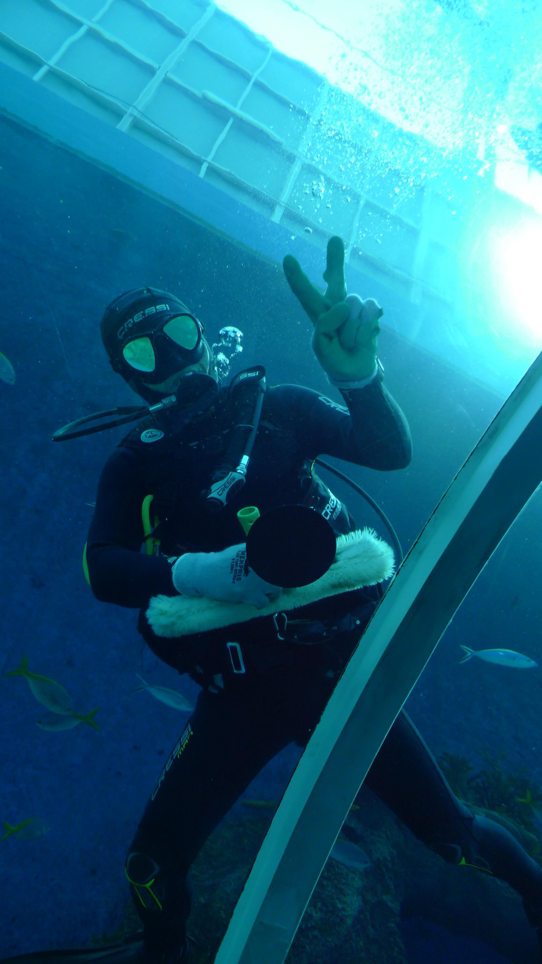 壁纸 动物 海底 海底世界 海洋馆 水族馆 鱼 鱼类 2232_3968 竖版 竖