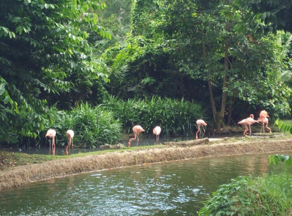 【携程攻略】新加坡新加坡动物园朋友出游点评