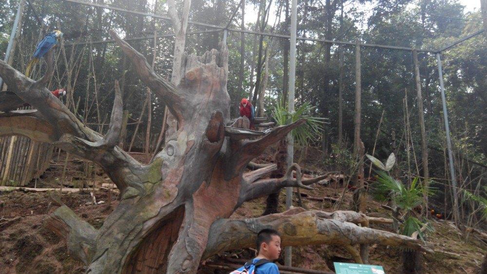 【携程攻略】四川碧峰峡野生动物园景点