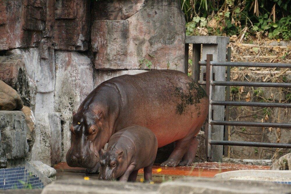 【携程攻略】广东广州动物园景点