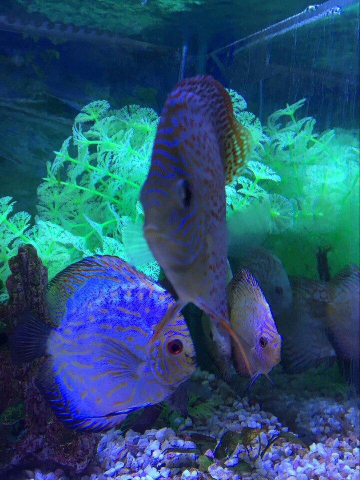 壁纸 动物 海底 海底世界 海洋馆 水族馆 鱼 鱼类 721_960 竖版 竖屏