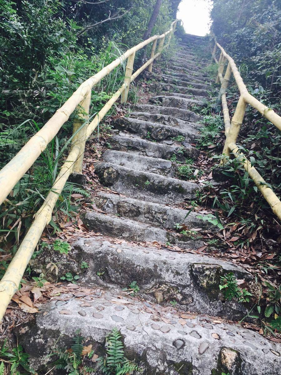 王子山森林公园门票_王子山森林公园