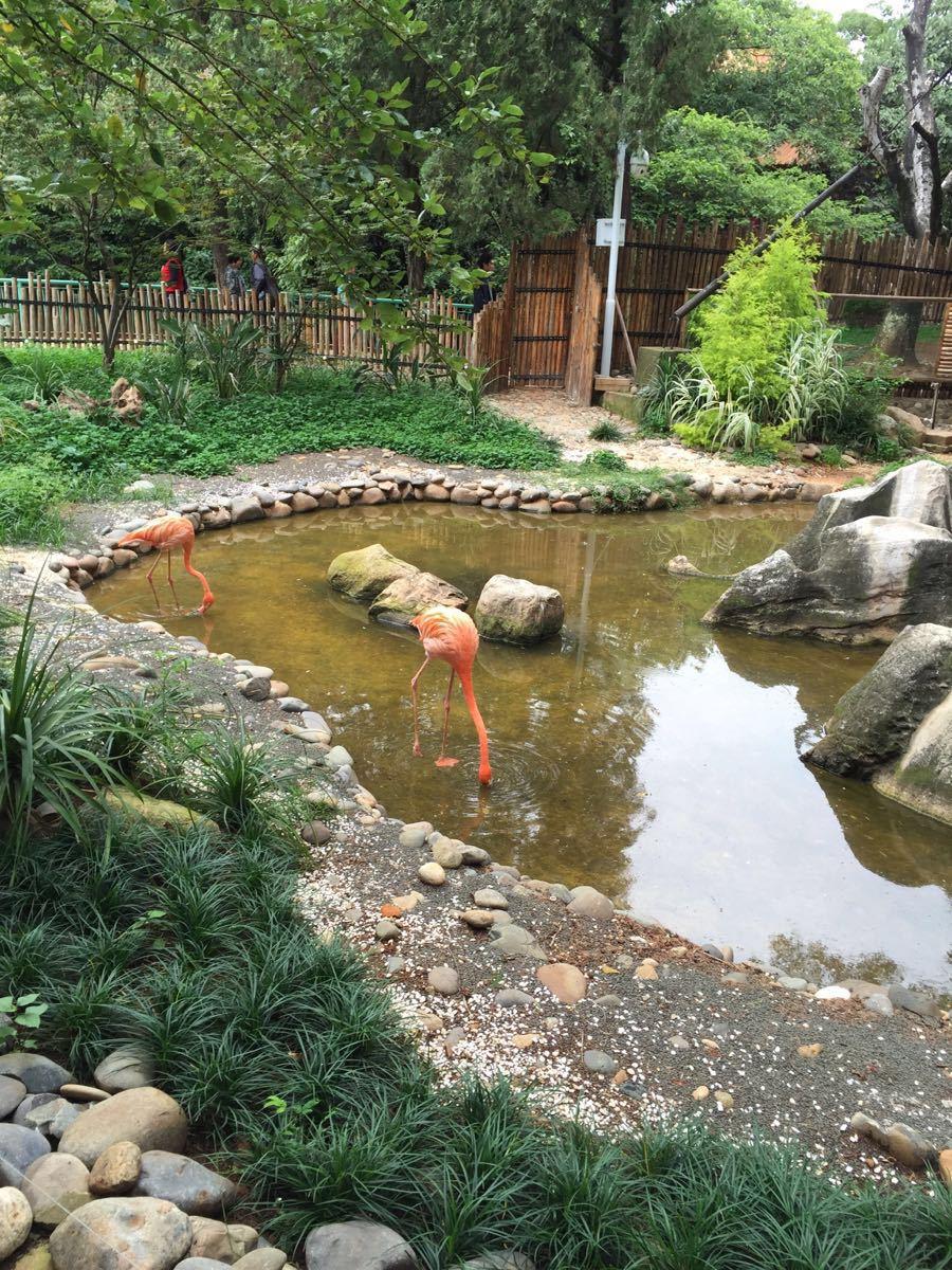 【携程攻略】云南昆明动物园景点
