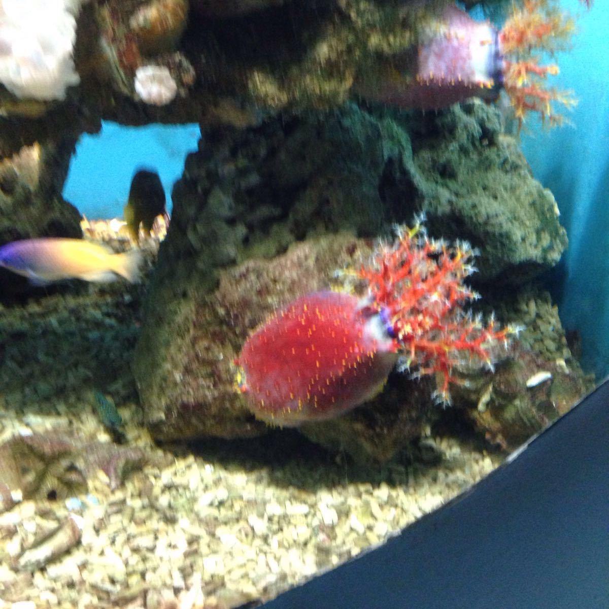壁纸 动物 海底 海底世界 海洋馆 水族馆 鱼 鱼类 1200_1200