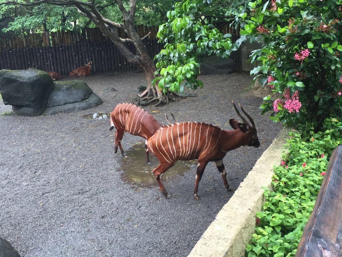 【携程攻略】台湾台北市立动物园景点