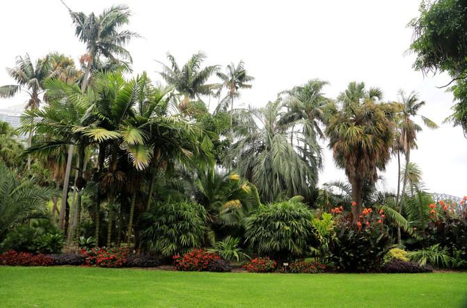悉尼、堪培拉21日自由行⒁悉尼6-皇家植物园-兖州建筑设计院位置图片