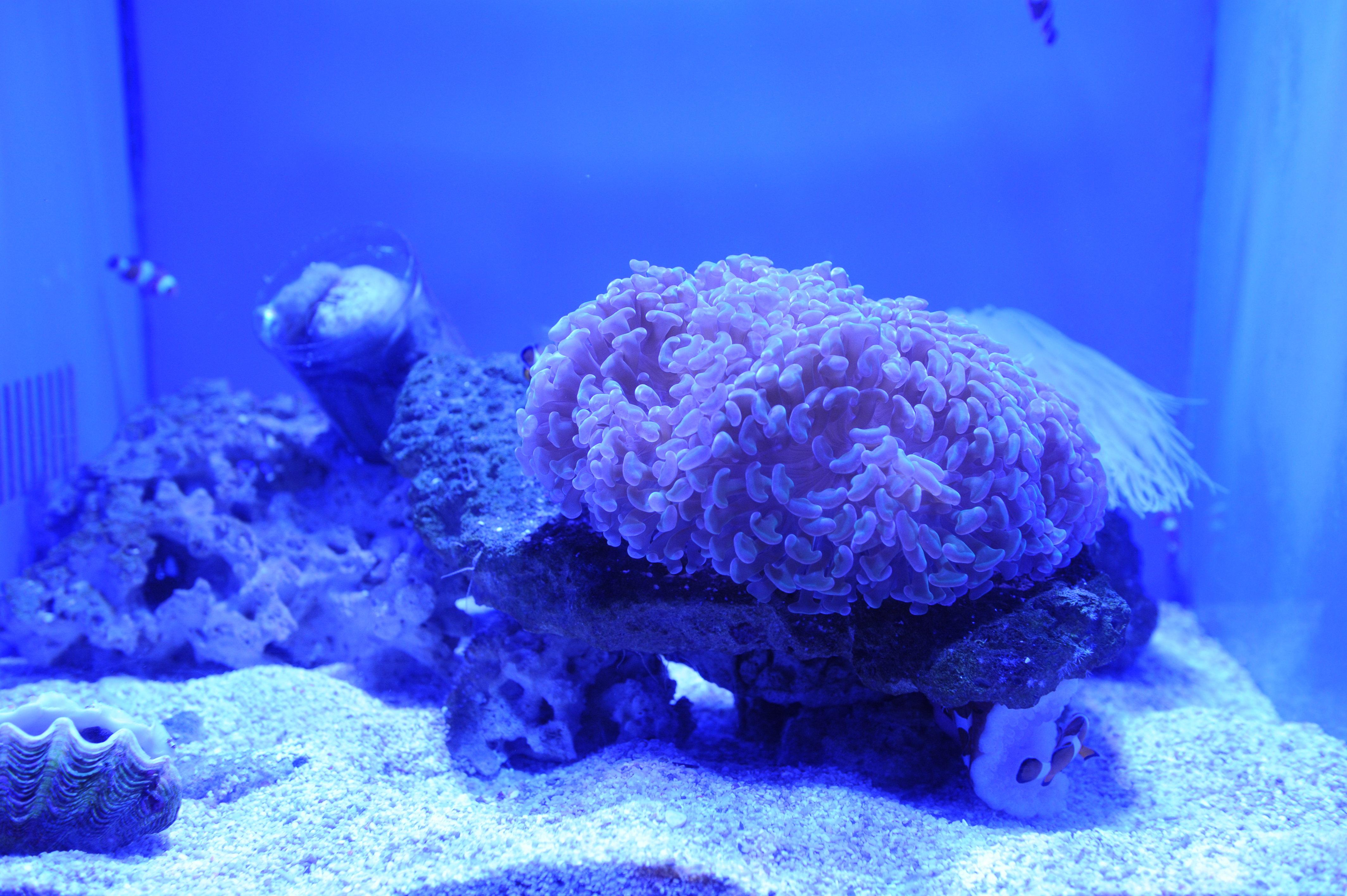 壁纸 海底 海底世界 海洋馆 水族馆 桌面 4256_2832