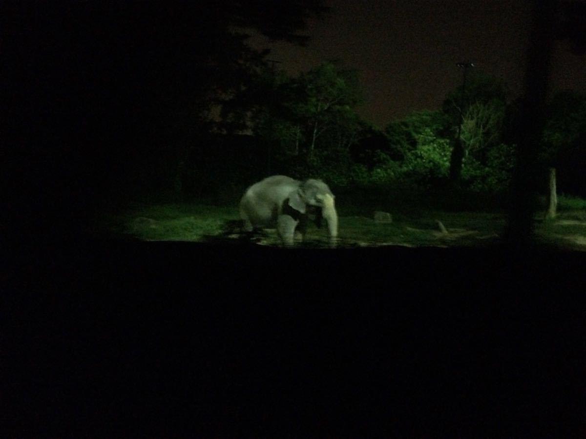 【携程攻略】新加坡夜间野生动物园好玩吗