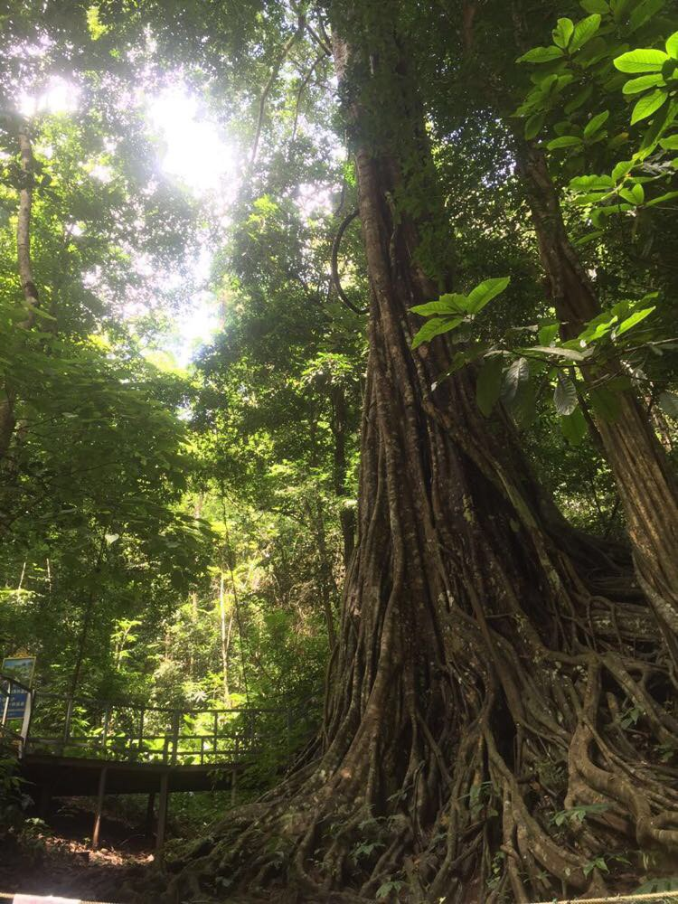西双版纳热带雨林