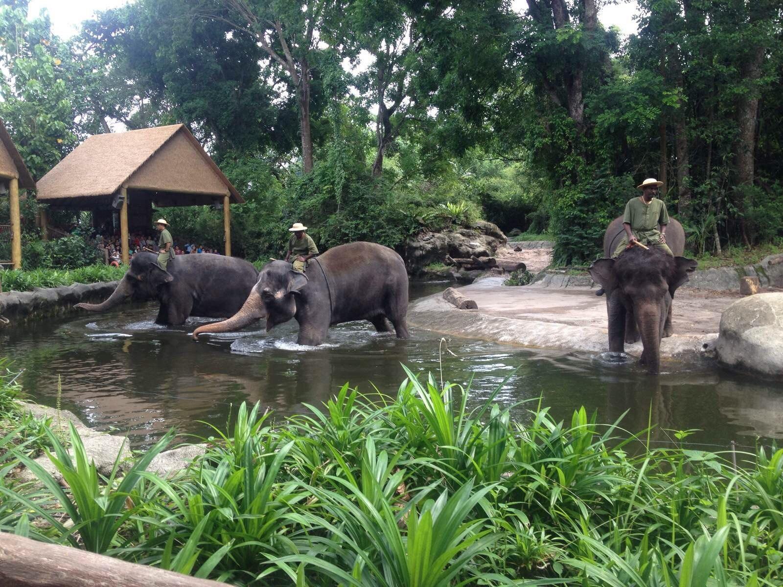 【携程攻略】新加坡新加坡动物园景点,参观动物园最有