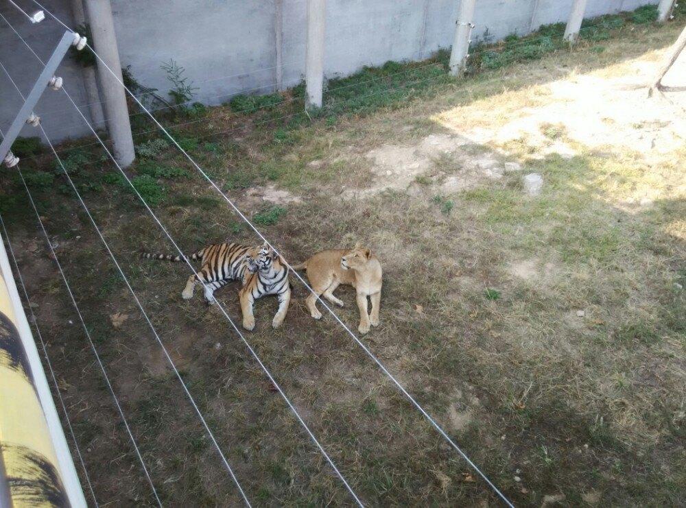 动物自然保护区景点