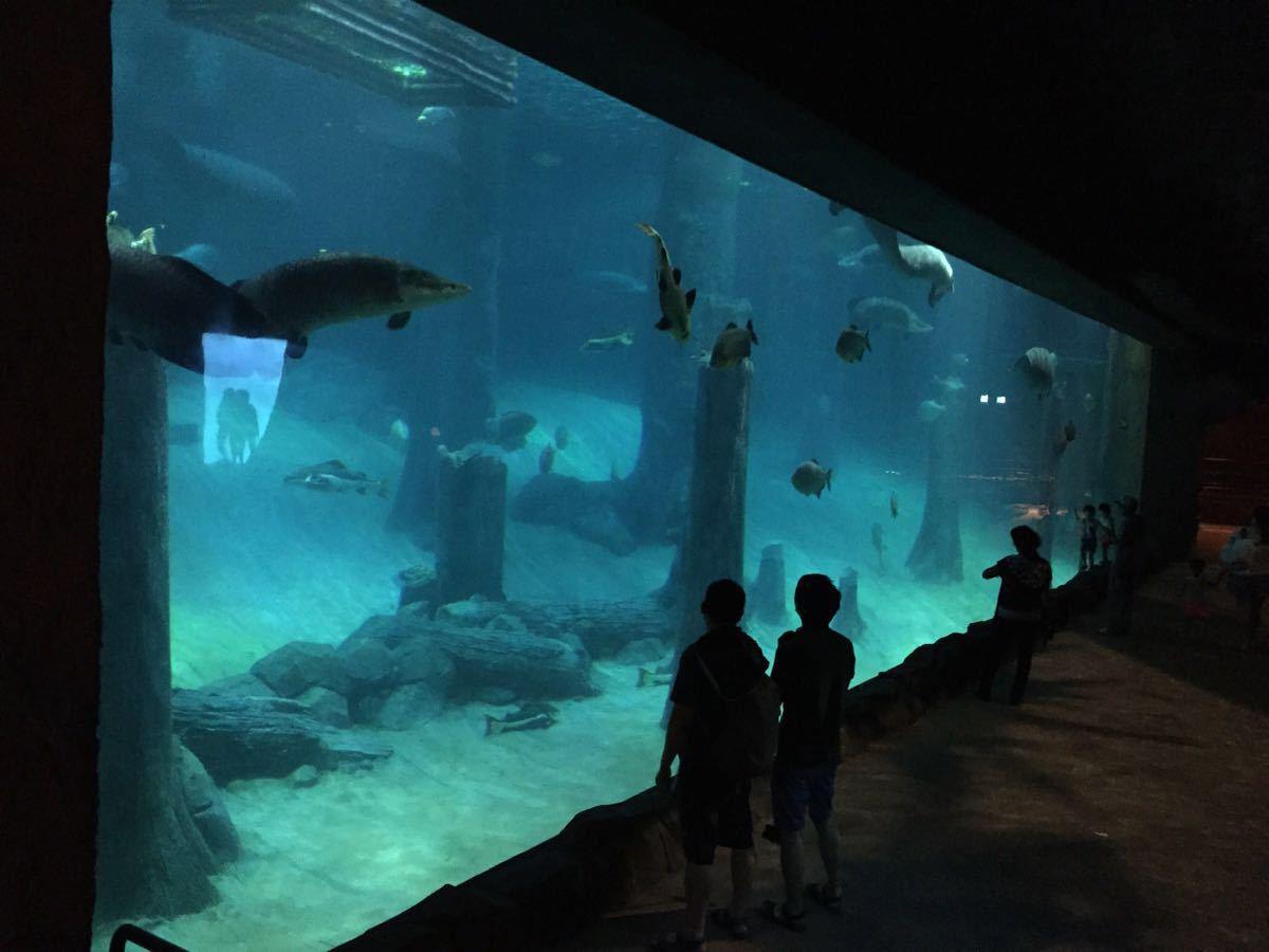 【携程攻略】新加坡河川生态园好玩吗