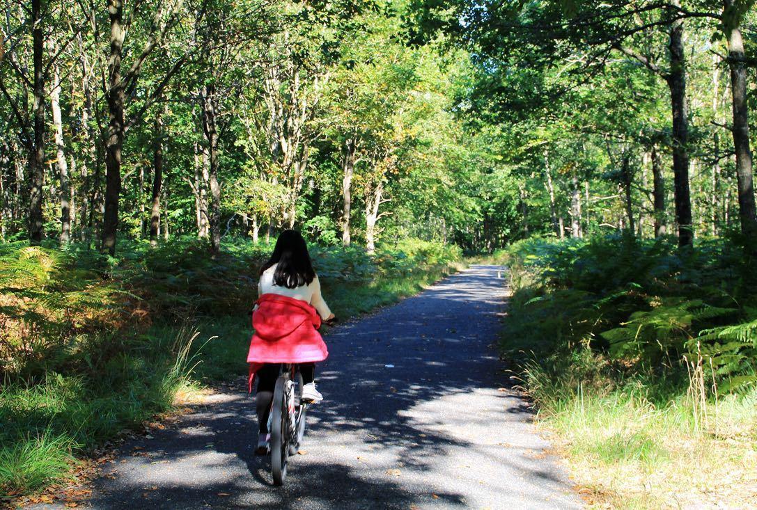 应该是法国最大的森林里,从枫丹白露镇中心穿过森林骑行图片