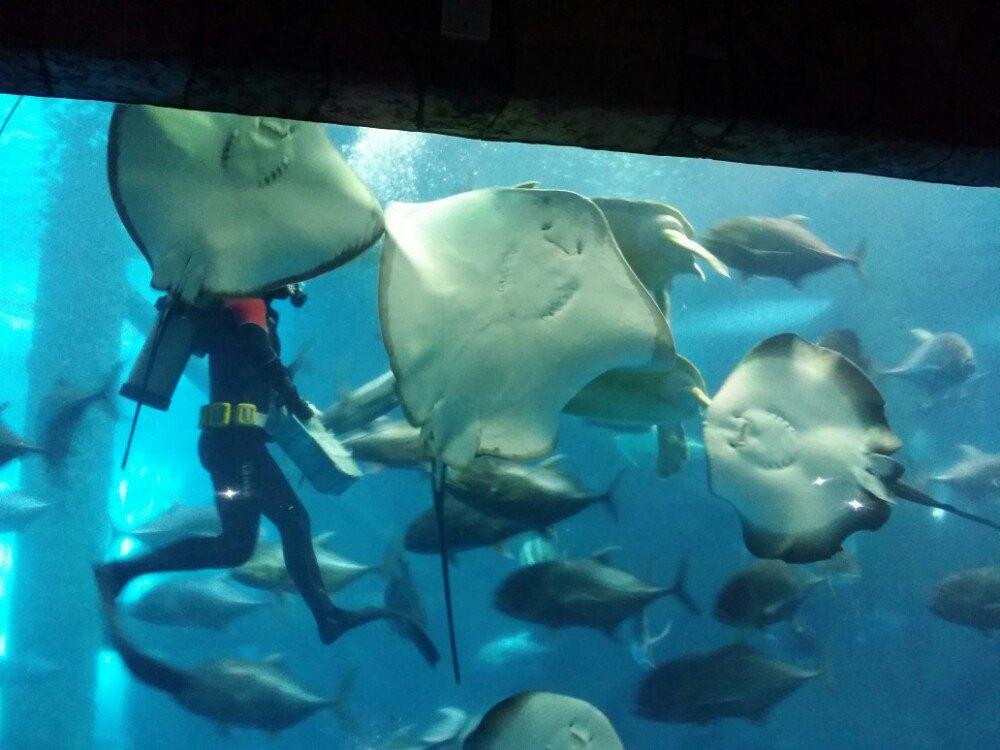 【携程攻略】安徽合肥海洋世界景点