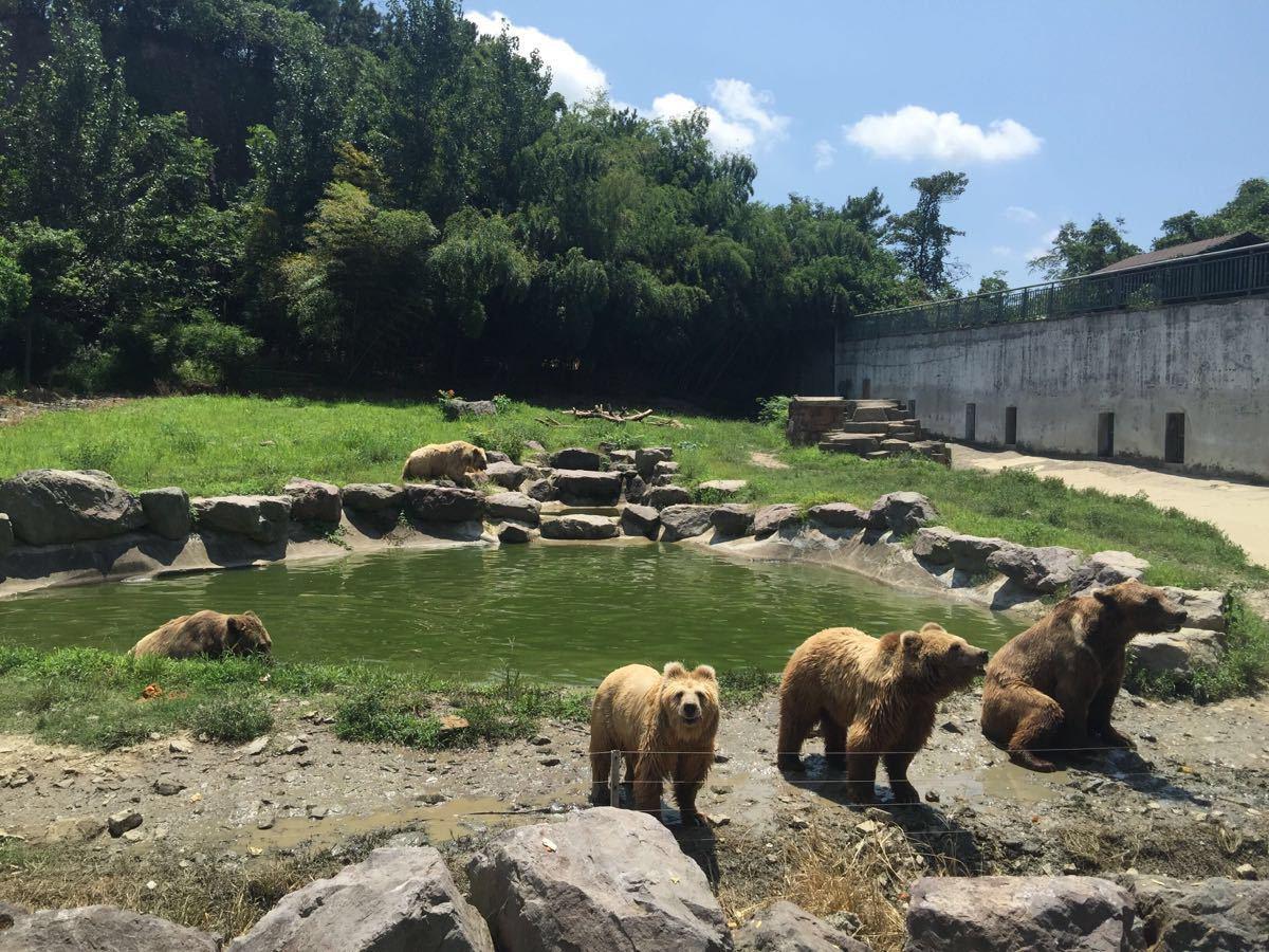 动物园里面动物的种类还是挺多的,一天根本看不完。原来宁波还有大熊猫,我从来都不知道。但是看到动物表演其实还是挺心疼的,感觉那些动物为了博人类一笑也是受了很多苦,因人而异吧,可能有些人就是喜欢去动物园看表演,反正我是不喜欢。还有很多动物都是脏兮兮的,看到有游人过来喂食就非常激动,不知道动物园有没有好好照顾它们。