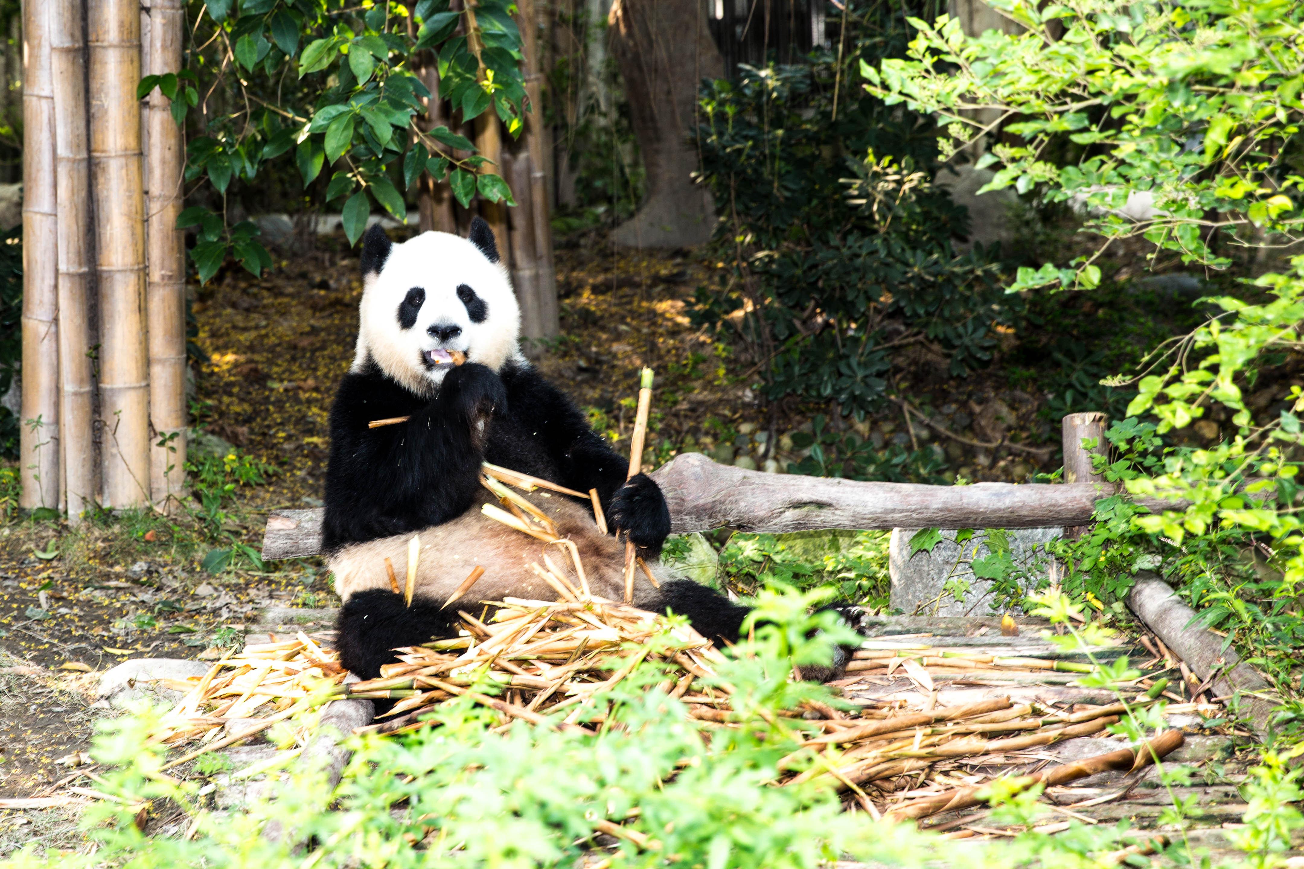 成都大熊猫基地 客票中心