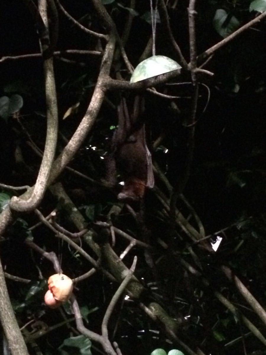 【携程攻略】新加坡新加坡夜间野生动物园怎麼样