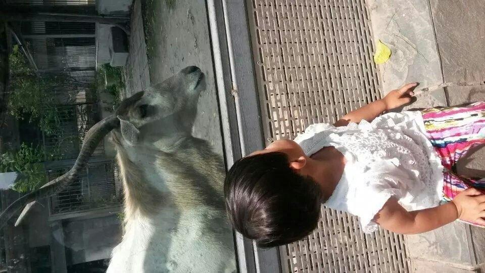 【携程攻略】北京北京动物园景点,一家三口去动物园,.