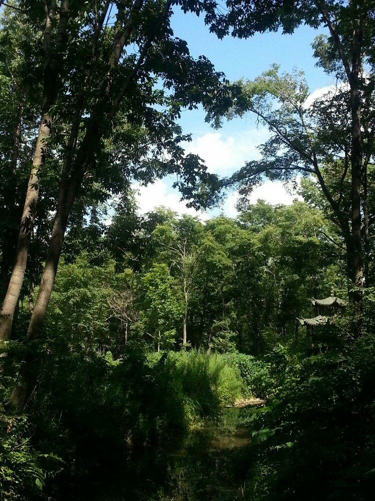 【携程攻略】双鸭山青山国家森林公园景点,离市区比较
