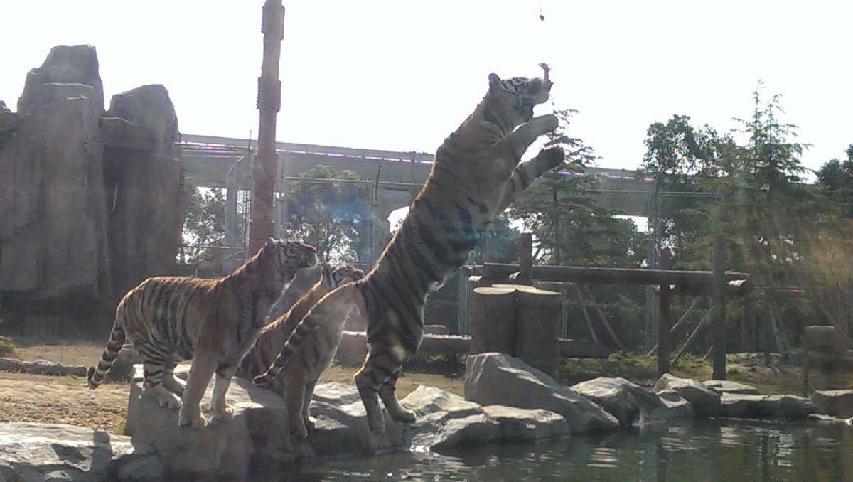 【携程攻略】上海上海野生动物园景点