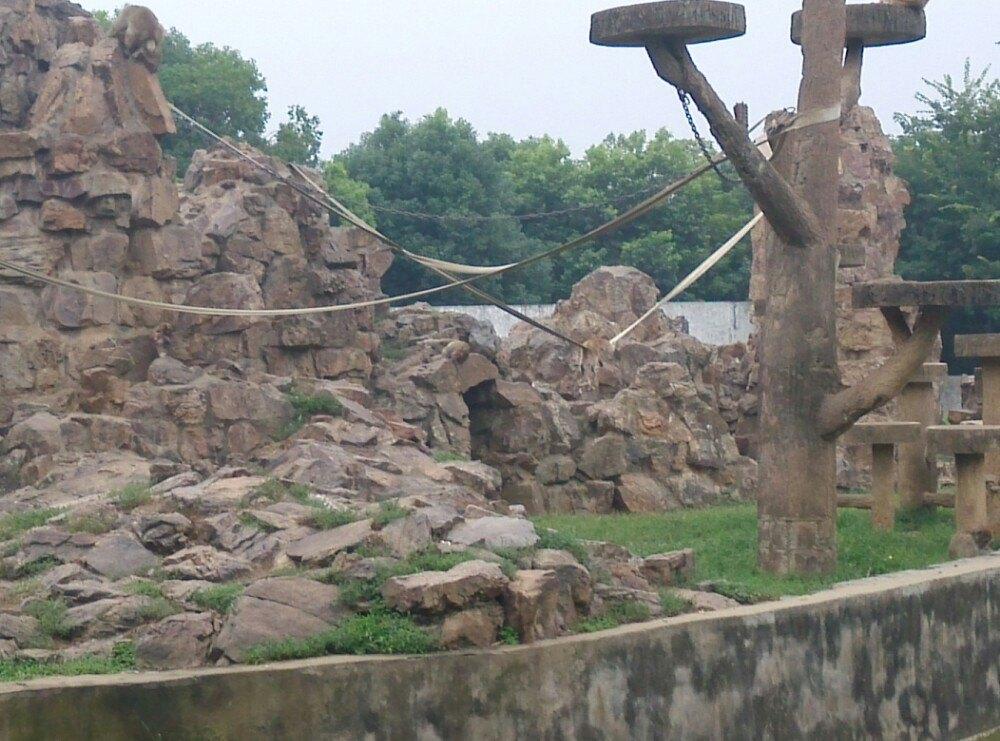 【携程攻略】安徽合肥野生动物园景点