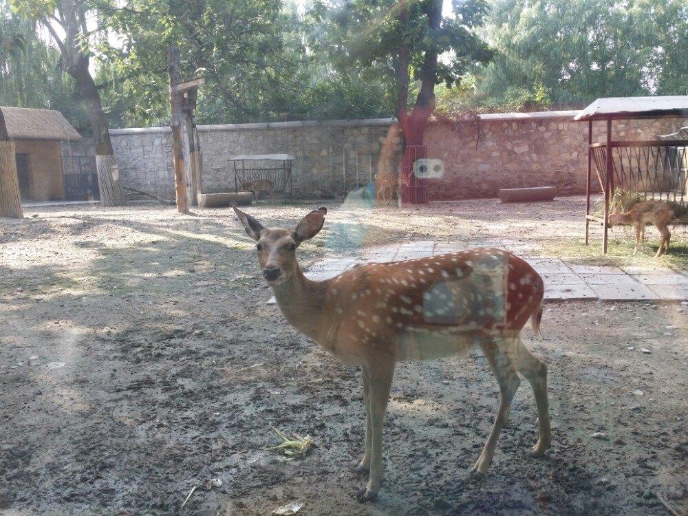北京动物园好玩吗
