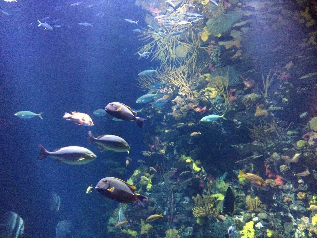 长风公园水族馆门票_长风公园海洋世界好玩还是上海水族馆好玩-上海水族馆门票大 ...