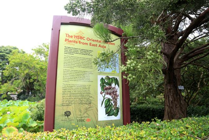 悉尼、堪培拉21日自由行⒁悉尼6-皇家植物园-平面设计店面图片